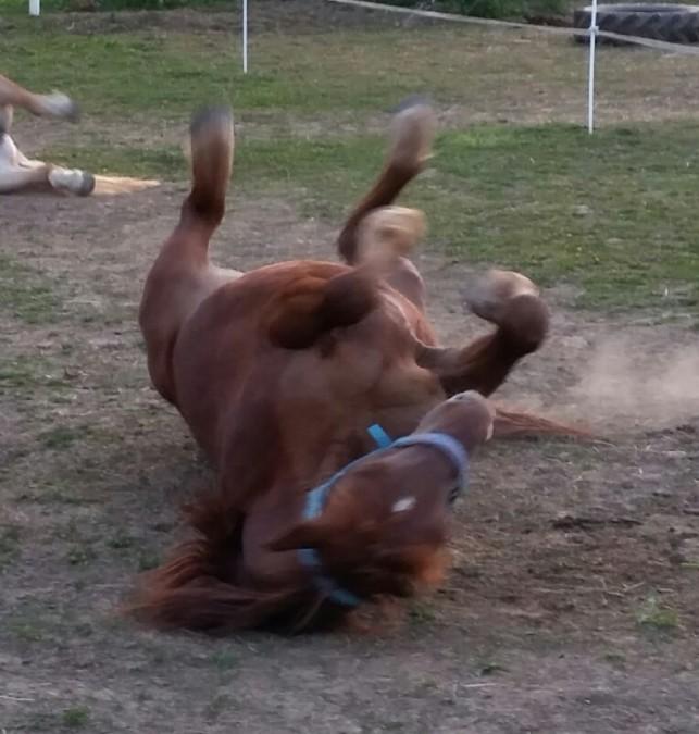 Pferde Foto: Ich und Petro – Ich liebe meinen Petro