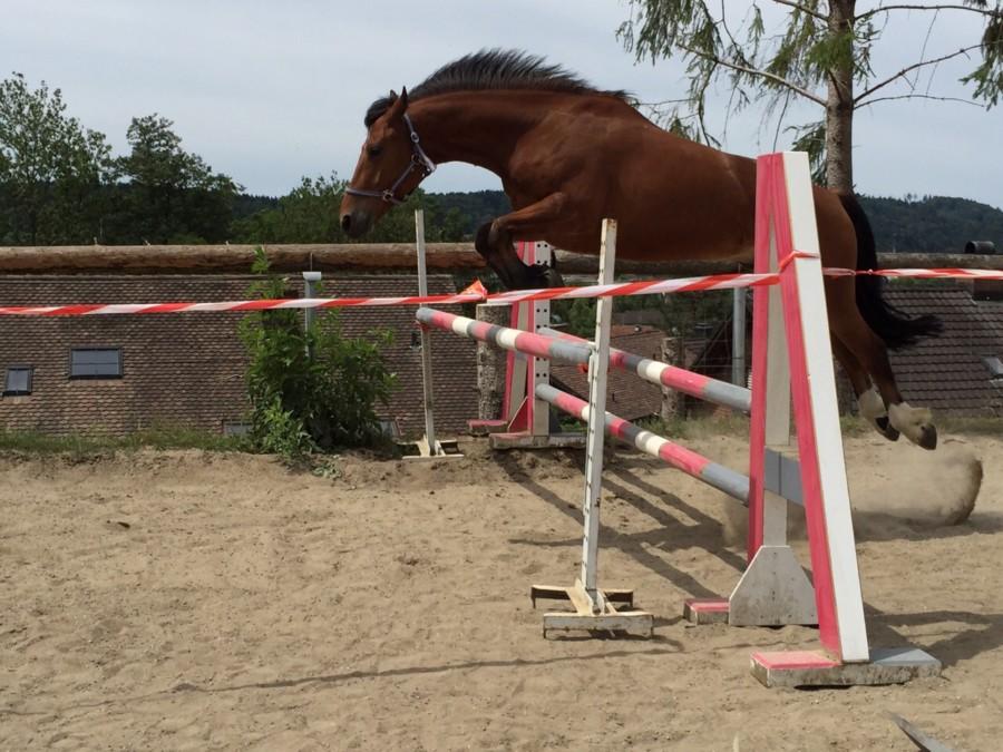 Pferde Foto: Monika und Joey – Freispringen