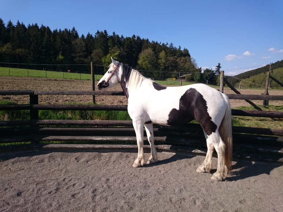 Pferde Foto: Alexandra und Sky – Meine Blauäugige Schönheit