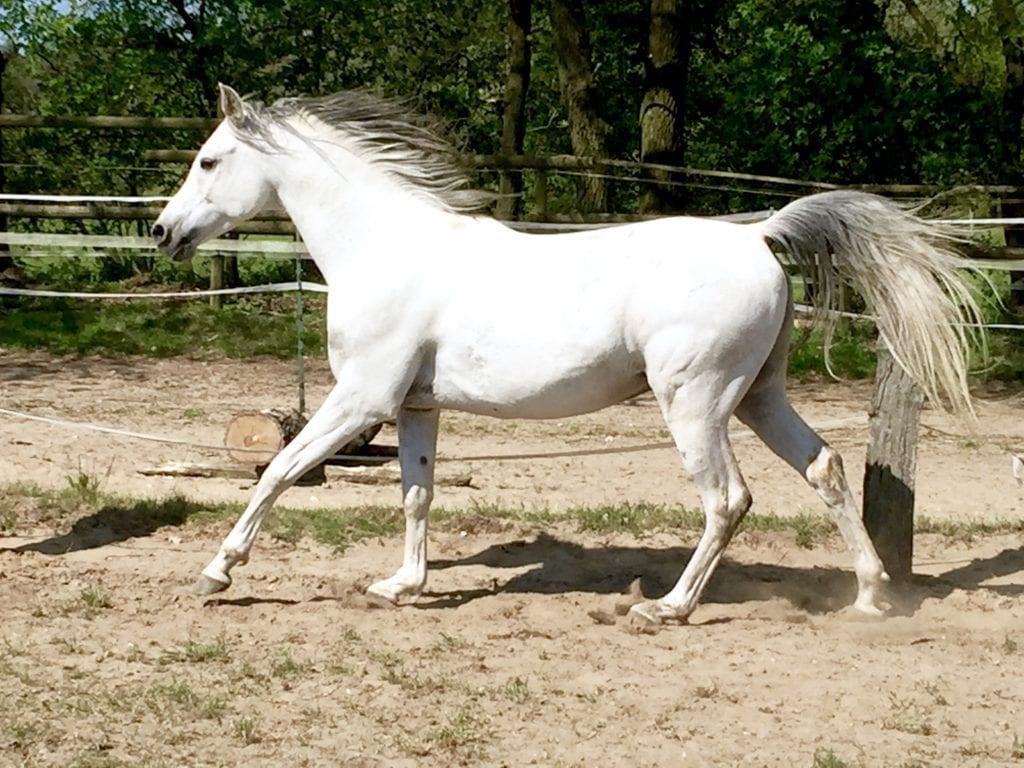 Pferde Foto: Klaudia und Riad El Hadi - First run by my side