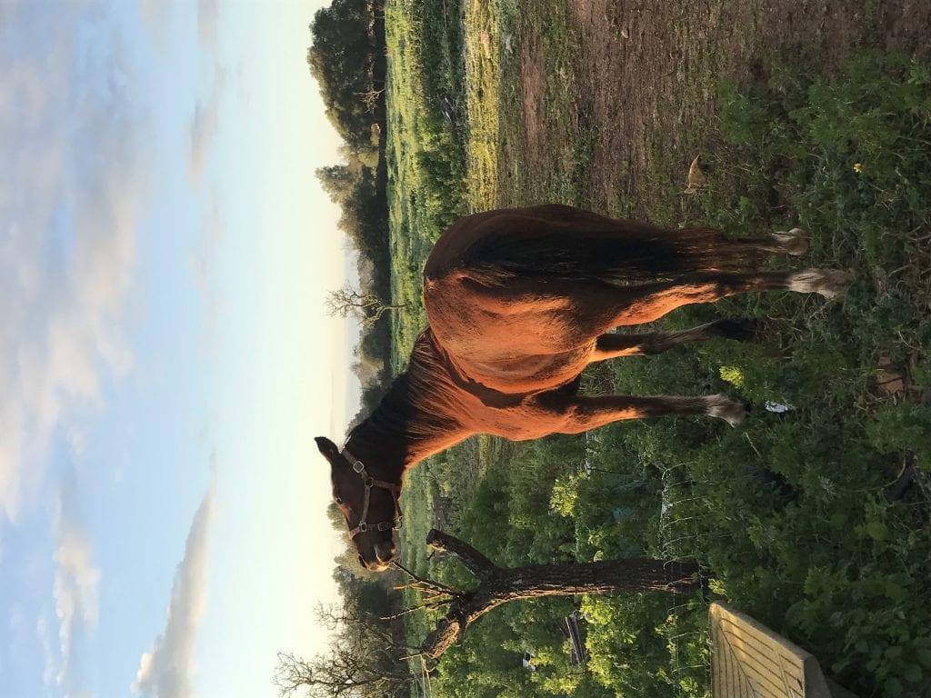 Pferde Foto: Jasmin und Saphir - Mein Spiegelbild