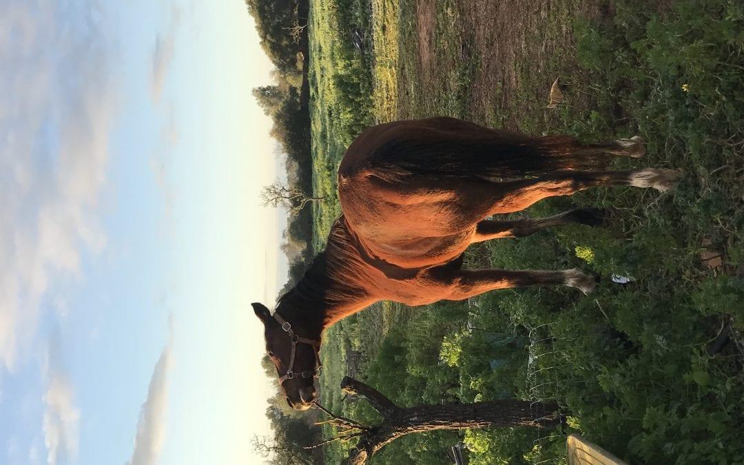 Pferde Foto: Jasmin und Saphir – Mein Spiegelbild