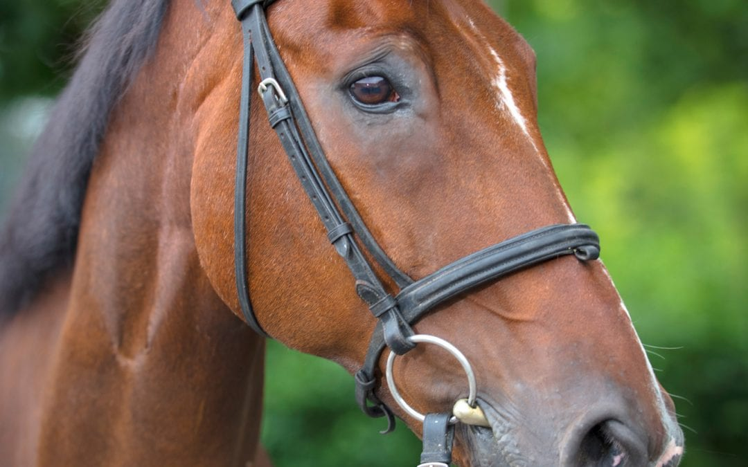 Pferde Foto: Hilla und Don – Unser Schuli für die Großen und Kleinen