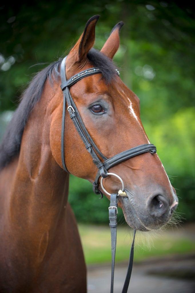 Pferde Foto: Hilla und Don - Unser Schuli für die Großen und Kleinen