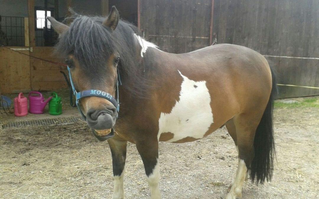 Pferde Foto: Lena und Mogli – Mit lachen  durchs Leben