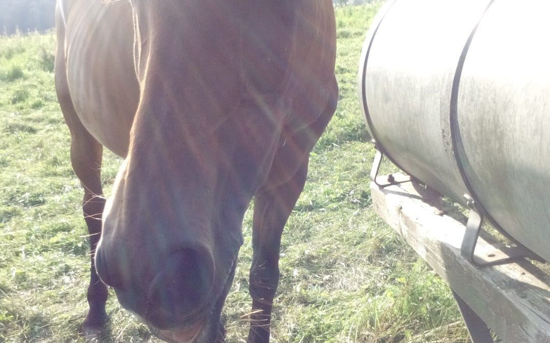 Pferde Foto: Annalena und Costa – Öhm