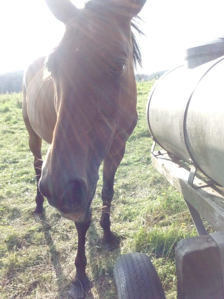 Pferde Foto: Annalena und Costa - Öhm
