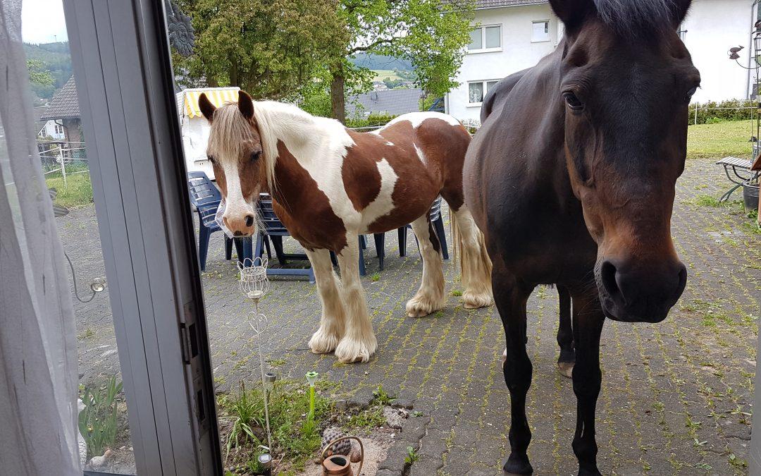 Pferde Foto: Manuela und PENNY Meadow – Ich geh dann mal ins Wohnzimmer für eine Extra Portion 😉